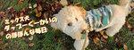 ミックス犬ダップーくーかいののほほんな毎日 ブログバナー